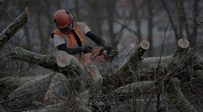 Norwalk Tree Service
